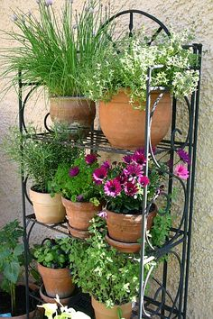 Gemüse vom Balkon - Cortney Campbell from the balcony - Cortney Campbell # dec Cottage Garden Plants, Balcony Garden, Garden Pots, Small Courtyard Gardens, Back Gardens, Outdoor Gardens, Balcony Flower Box, Garden Shelves, Vertical Farming