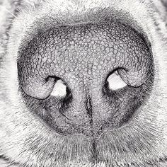 A macro drawing of a section of an animal.  Maybe draw a macro of section of their faces, similar to a self-portrait?  This is a good follow up to their 7th grade painting project (animal watercolor paintings).