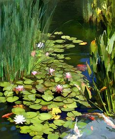 Water Lilies And Koi Pond