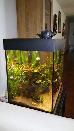Die 74 Besten Bilder Von Aquarium Fish Tanks Aquariums Und