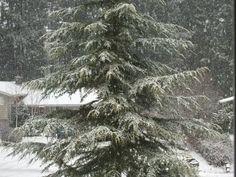 A snowy day!