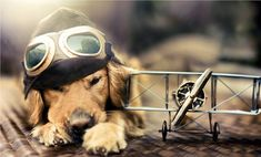 Endearing Animal Portraits By 18 Year Old Photographer Jessica Trinh