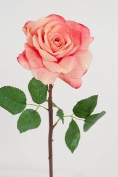 Rose 50cm Rosa 89kr