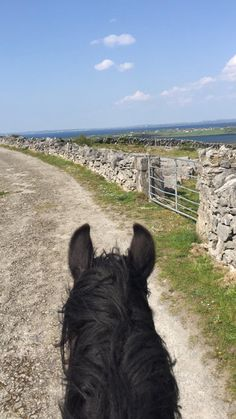 Ted is back in work after a break for the winter. He is loving life leading the treks. Trail Riding, Horse Riding, Time Travel, Us Travel, Horse Trails, Riding Holiday, Horse Ears, Horses For Sale, Trekking