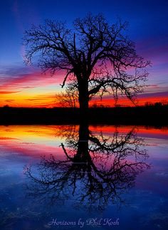 *REFLECTIONS ~ Tree of Life