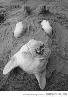Sand puppy