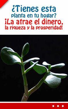¿Tienes esta planta en tu hogar? ¡La atrae el dinero, la riqueza y la prosperidad!