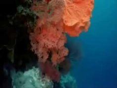 Kıyısız Deniz- Ezginin Günlüğü