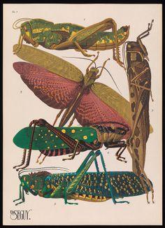 E.A. Séguy. Insectes : vingt planches en phototypie colorie´... Plate 7