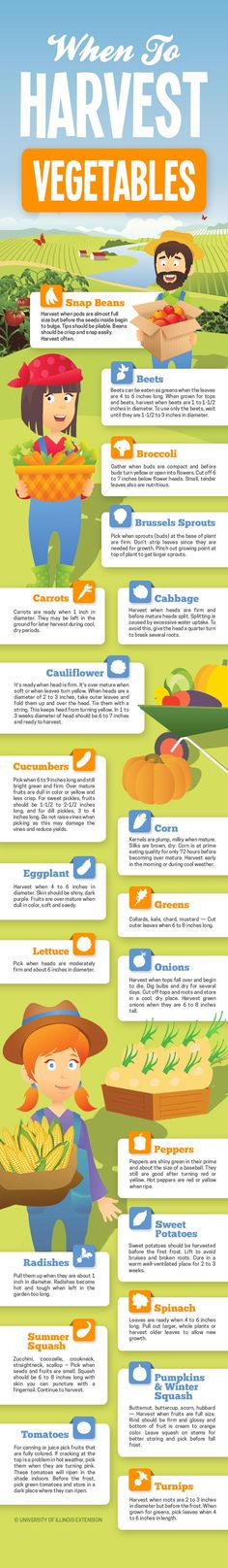 "Handy infographic for gardeners! ""When to Harvest Vegetables"" #garden #produce #veggies"