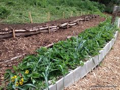 Here's a Quick Way to Terrace a Hill: Are you challenged with sloping land? Here's a solution to stop erosion on a hillside and create an easily-navigable terrace garden.