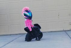 At two and a half years old, Kymmee dons a full face helmet and hops on her minimoto pocket bike on an almost daily basis, shredding tires taking corners.