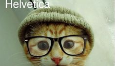 Funny pictures about Hipster kitty. Oh, and cool pics about Hipster kitty. Also, Hipster kitty photos. Baby Animals, Funny Animals, Cute Animals, Crazy Cat Lady, Crazy Cats, I Love Cats, Cool Cats, Hate Cats, Cat Wearing Glasses