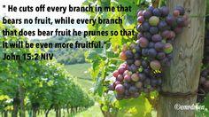 Joh15:2 be fruitful