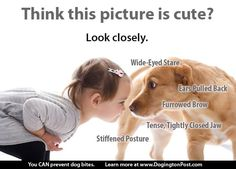 Dogs and Kids. Know your dog. Understand dog behaviour. Limits. Safety.