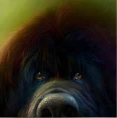 Ralph Signed Art Print By Stephen Hanson - Arthouse Gallery #newfie #cuddlebear #ilovedogs