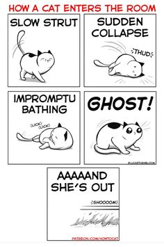 Funny Animal Memes, Cute Funny Animals, Cute Baby Animals, Funny Cats, Crazy Cat Lady, Crazy Cats, Cat Jokes, Cat Humour, Humor