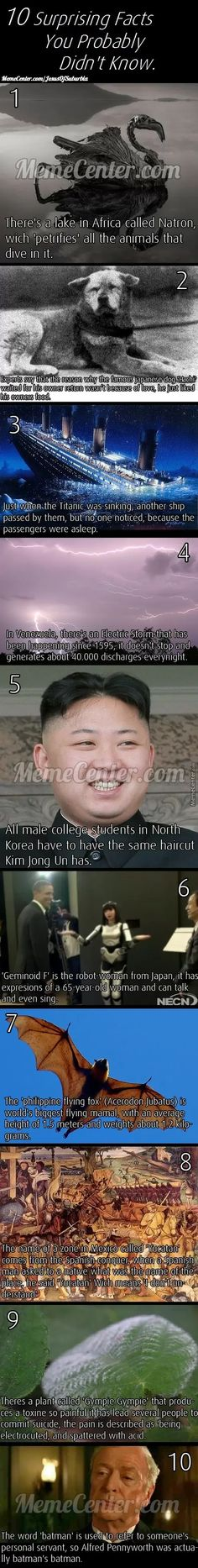 Just some facts  // funny pictures - funny photos - funny images - funny pics - funny quotes - #lol #humor #funnypictures
