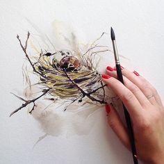 Birds nest                                                                                                                                                     More