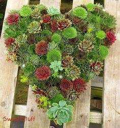 Structural plants on pinterest succulents succulent for Structural plants for small gardens