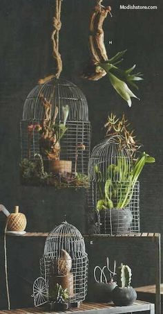Roost Foliage Bird Cage Planters