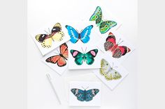 Assorted Butterfly Cards (Set of 8)