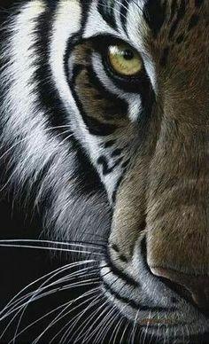 Close up........Eye of a tiger-