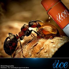 Orange Flavorz by IICE - Hot as Ice!!!!  www.iice-vodka.com , www.iice.biz , best vodka in India