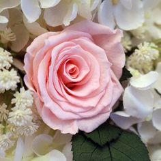 Preserved flower hea