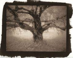 Vedos » Printing Brown
