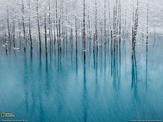 Hokkaido Biei. Ice Forest
