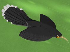 12HuiaBirds | Yoozoo Books Birds, Image, Bird