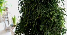 Witajcie Kochani!  Do strojenia bożonarodzeniowej choinki jeszcze kilka tygodni, ale u nas w domu,mamy już przedsmak świątecznej magi... Tree Decorations, Christmas Decorations, Holiday Decor, Christmas Crafts, Christmas Trees, Herbs, Diy Crafts, Floral, Holidays