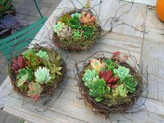 Birds Nest + Succulents = Two Thumbs Up!!! Photo: Debra Lee Baldwin