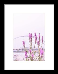 Serenity Framed Print by Mc. All framed prints are professionally printed, framed, assembled, and shipped within 3 - 4 business days and delivered ready-to-hang on your wall. Choose from multiple print sizes and hundreds of frame and mat options.