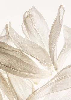 Eucalypso - Organic Tencel Eucalyptus Bedding and Sheets Photo Backgrounds, Wallpaper Backgrounds, Screen Wallpaper, Phone Wallpapers, Wallpaper Quotes, Fond Design, Mood Images, Beige Aesthetic, Flower Petals