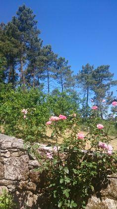 Rosas y pinos