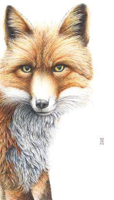 'Grace' Coloured pen, pencil and acrylic - Nikki McIvor Fox Home, Wild Honey, Grey Fox, Popular Art, Fox Art, Little Man, My Arts, Art Prints, Artist