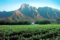 Boschendal Wine Estate, Western Cape, South Africa.