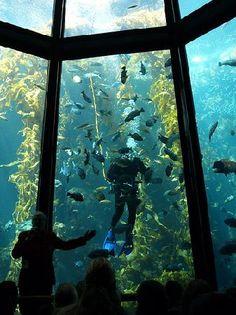 Monterey Bay Aquarium  Monterey Bay, CA
