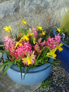 Hyacint Pink Pearl and Narcissus Tete a Tete. Wall Boxes, Window Boxes, Kitchen Plants, Some Ideas, House Plants, Planters, Pearls, Garden, Garten