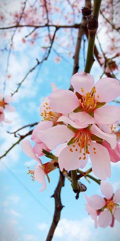 Spring, Plants, Beautiful, Planters, Plant, Planting