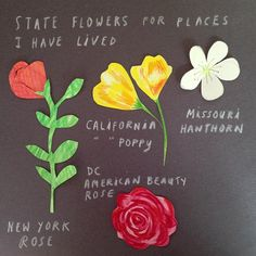 State Flowers for places I have lived #getwise2013 #california #newyork #dc #missouri