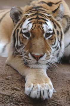 Wildlife of Russia | The Natural Wonders of Russia | Pinterest |Native Animals From Russia
