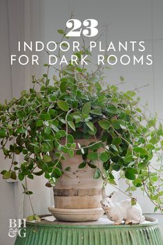 If you're looking for plants that don't require tons of sunlight check out this list of 23 of our favorite low-light plants. If you're looking for plants that don't require tons of sunlight check out this list of 23 of our favorite low-light plants. House Plants Decor, Plant Decor, Garden Plants, Patio Plants, Plants In The House, Pots For Plants, Flowering House Plants, Kitchen Plants, Household Plants