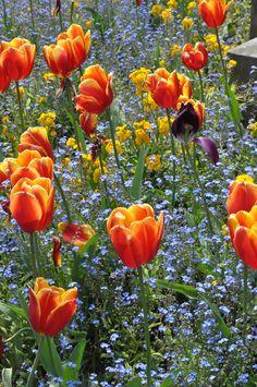 Fleurs à la place république, by Ozgur Oguz