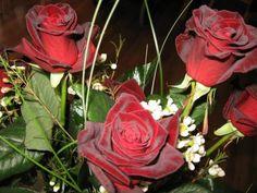 sametové růže (48 pieces)