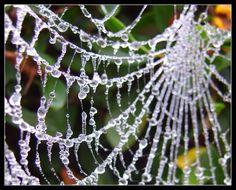 web.    crystal like