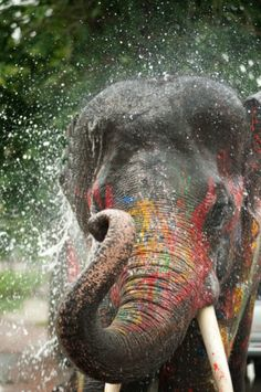 Songkran – Adventures in Thailand – Loving Life With Cass Thailand Vacation, Phuket Thailand, Thailand Travel, Asia Travel, Songkran Thailand, Travel Pics, Asia Expat, Songkran Festival, Thailand Adventure