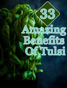 Benefits Of Tulsi/Basil For Skin, Hair And Health :Tulsi is also a good germicidal agent that protects the human body from all types of viral infections.